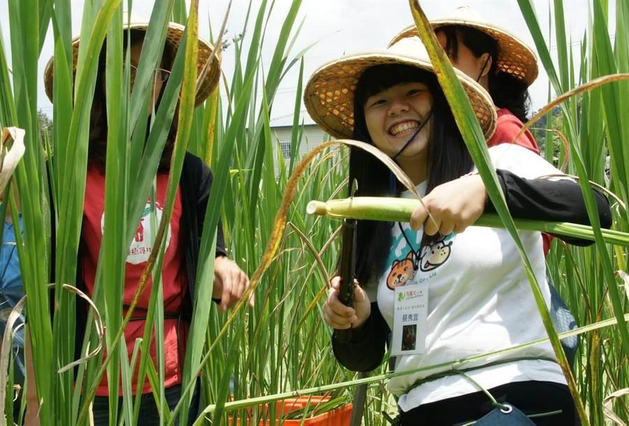 ▲埔里鎮一新社區是個與自然生態共好的客家庄,茭白筍園保育台灣白魚有成,是個發展生態產業有成的社區。(楊樹煌攝)