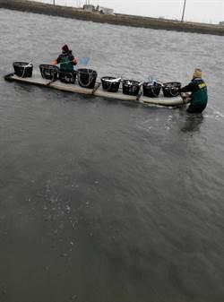 低溫多日 沿海養殖物零星凍死