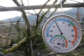 梨山一度降冰點 溫帶果樹休眠不怕凍