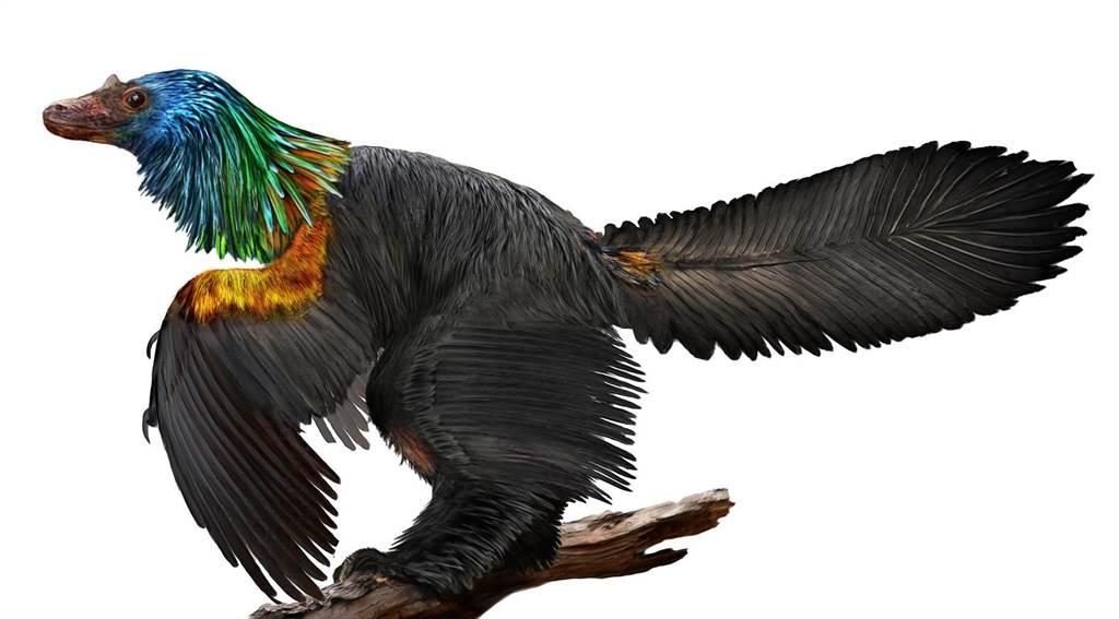 科學家從彩虹龍的化石細節證明,牠具有斑斕的羽毛色彩。(圖/德州大學傑克森地球科學學院)