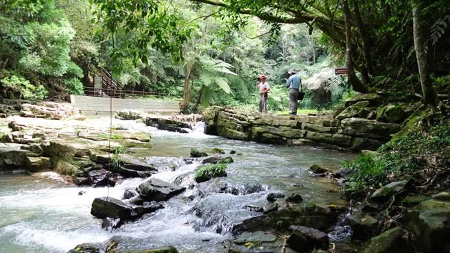 水社區與五城村、桃米里等蓮華池山系周邊聚落,為台灣單位面積物種密度最高的區塊;圖為充滿原始氣息的澀水「水上平台」步道。(沈揮勝攝)