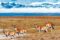 青藏高原暖化加劇