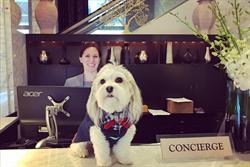 一個人旅行孤單嗎?竟有飯店推出外借狗狗服務