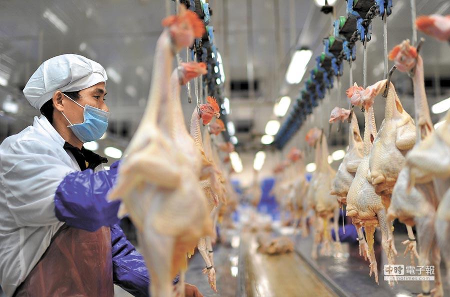 廣東省清遠市一肉雞屠宰的工人在生產線上忙碌。 (新華社資料照片)