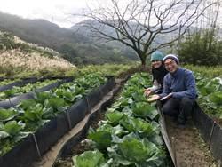 有機蔬菜太可口  羌穿山甲來朝聖
