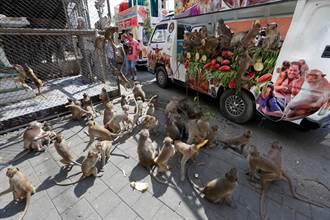泰國3000隻猴群洗劫2座村落與寺院