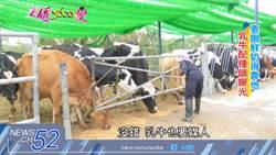 《主播3600變》想喝鮮奶竟得靠他?! 乳牛配種師全台僅十人