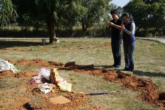 樹葬強調環保自然,台中市民接受度頗高,且不立碑,不造墳,鼓勵家屬靜默追思,但焚香、燒紙錢等傳統觀念有待改變。(王文吉攝)