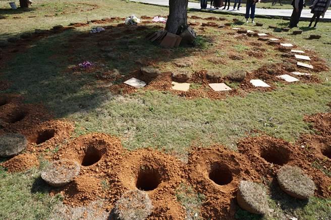 神岡區「崇璞園」每棵樹規劃76個穴位,目前3116穴位有8成滿。(王文吉攝)