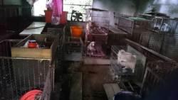 破獲非法品種犬狗場 藏匿中和偏僻山區