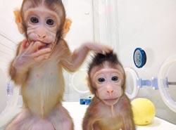 有利腦疾病及新藥研究!桃莉羊技術 複製猴姊妹誕生