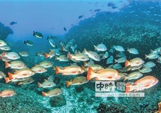 龍王鯛來作客 新魚種好驚艷