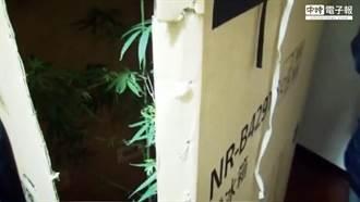 大學生臉書公然賣大麻! 吹捧「自己種」引警上門