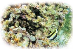 陸南海植礁造林 10年10萬平方米