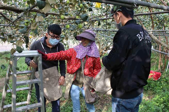 第一科大與高雄市農業局合作開發全國第一套「農來趣APP」舒緩農村缺工。(第一科大提供)