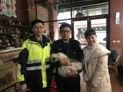 波斯貓民宿迷失1周 警民展開尋貓任務