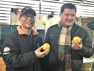 中寮柳丁滯銷 泰雅總經理採購3千公斤協助果農促銷