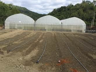 旱作管路灌溉補助 高雄領先已做41公頃