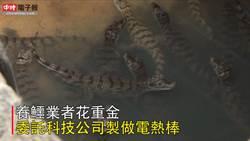 業者砸重金使用高科技 上萬隻鱷魚寒冬「泡溫泉」