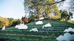 初春必訪!國內外遊客都愛的森林秘境 盛開在雲朵間的薰衣草森林