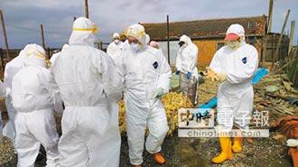 屏東肉鴨場 再現H5N8禽流感