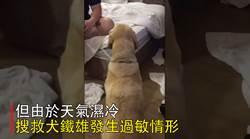 強震搶命》搜救犬「鐵雄」累壞 過敏甩頭撓耳今早就醫