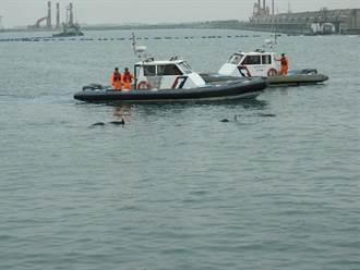 小虎鯨迷航紅毛港 海巡分工引導返航