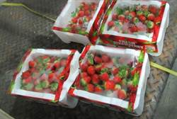 好市多又中鏢!進口韓國草莓 農藥超標8倍