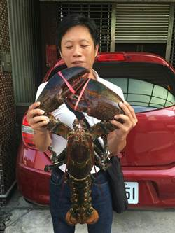 海鮮貨櫃驚見8公斤大龍蝦 捐給博物館製成標本