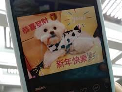Google AI幫大忙 助你巧手製作狗年賀卡