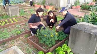 樹林公所可食地景 屋頂種菜好食寓