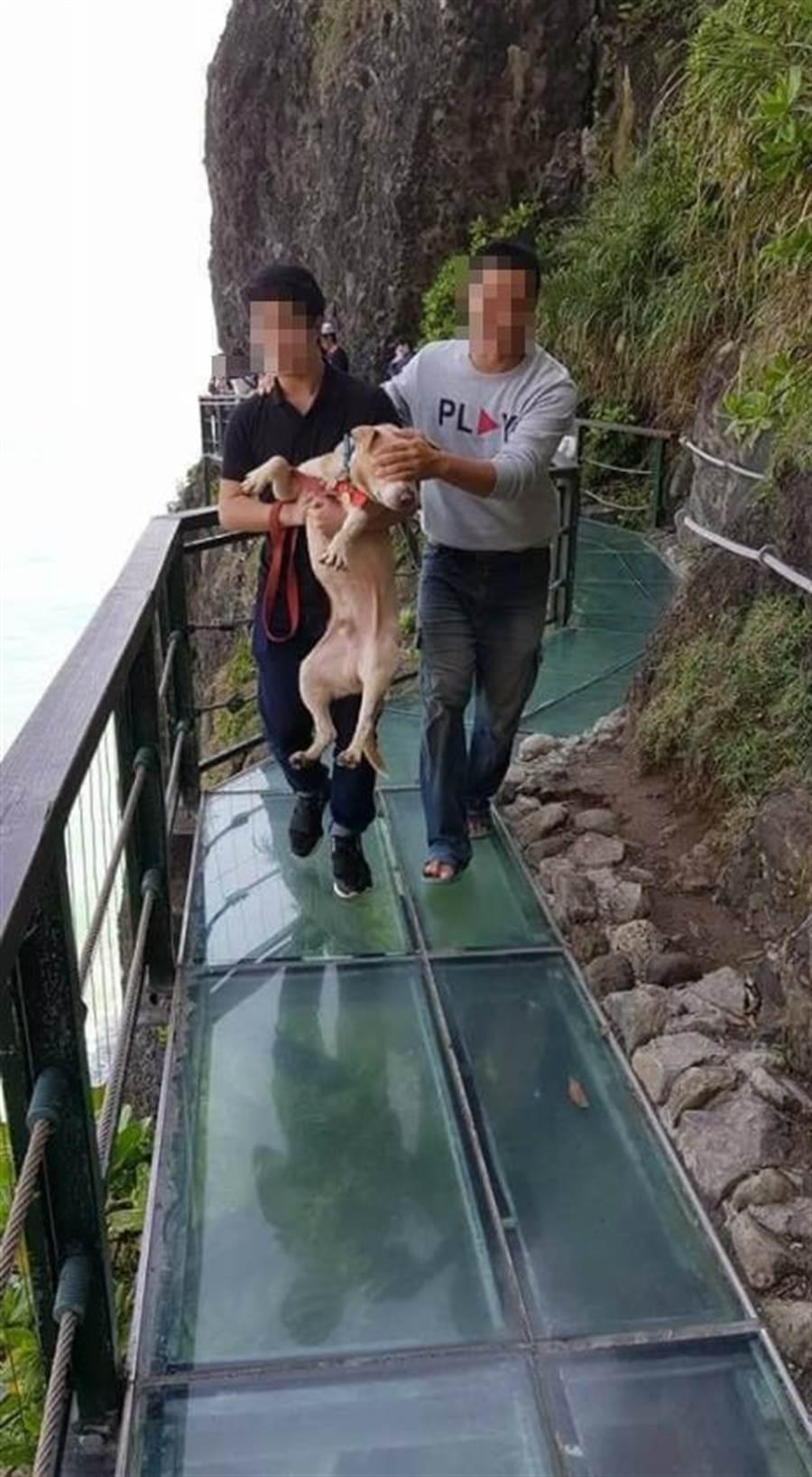 主人將狗狗扛起,另一人用遮住狗狗眼睛,將牠帶離天空步道。(圖/翻攝自爆笑公社)