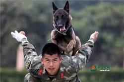 圖輯》解放軍隊中的汪星人+軍犬的由來