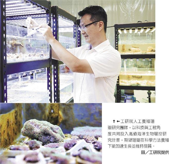 工研院人工養殖珊瑚研究團隊,以科技與工程角度共同投入高值海洋生物環控研究計畫,期望珊瑚在科學方法養殖下能加速生長並維持品質。 圖/工研院提供