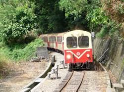 阿里山森林鐵路又出包!本線列車停駛「2周」維護檢修