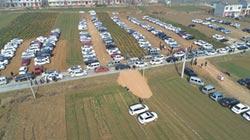 陸農搶觀光財 麥田變收費停車場
