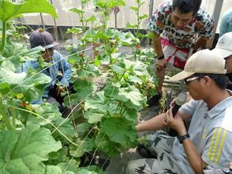 中市鼓勵青年投入農業生產最高補助80萬