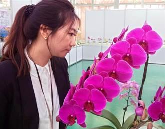 台灣新品種蘭花發表 單株叫價126萬