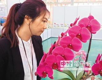 育種蘭花發表 新品喊價126萬