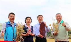 紅豆生長期不一難管理 農委會籲純種種植