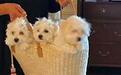 芭芭拉史翠珊複製了愛犬 你也可以