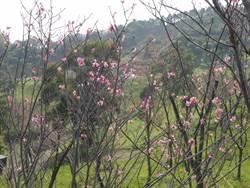 大自然空、風、光、水、地五大元素 打造草屯禪文化園區