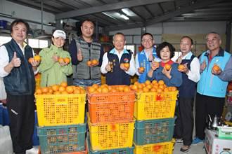 支持在地農業 營養午餐業者認購萬斤優質桶柑