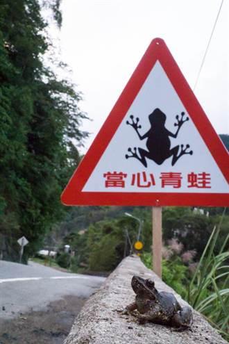 守護動物生命  新北減少路殺救蛙命