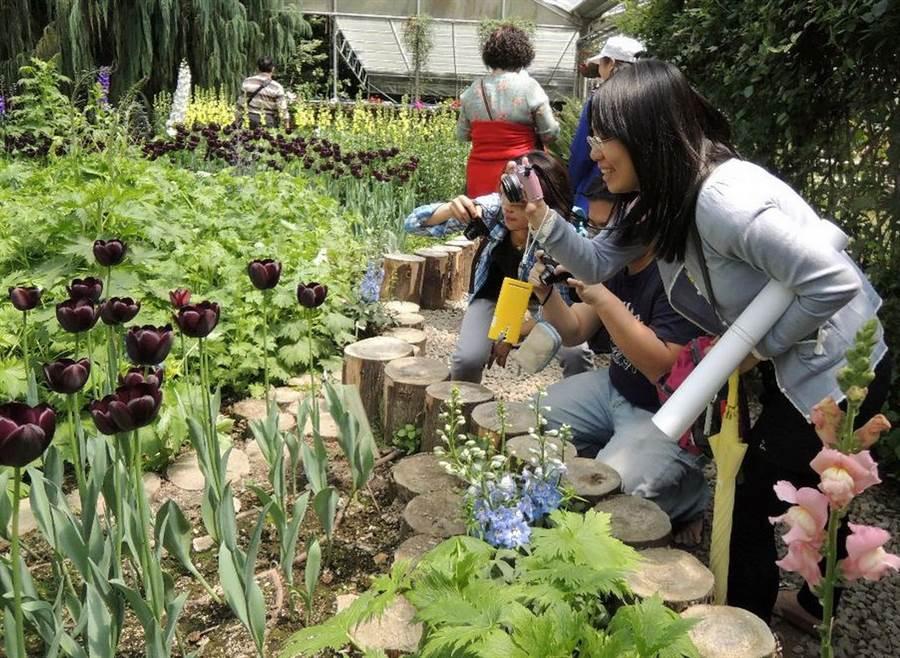 ▲梅峰農場正值「春之饗宴 」時,場內各種花卉百花齊放。(林管處提供)