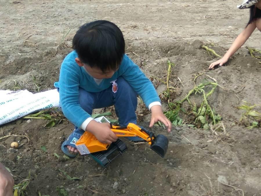 一位小男孩出動他的「怪手」挖馬鈴薯,煞是可愛。(許素惠攝)
