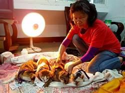 盼減少流浪動物 中市號召志工宣導犬貓絕育