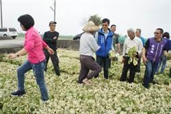 菜價崩跌 議員李明哲:農委會嚴重失能