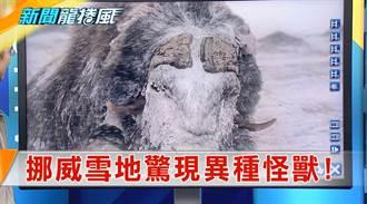 《新聞龍捲風》驚蟄不開春...全球氣候異變 挪威雪地驚現異種怪獸!