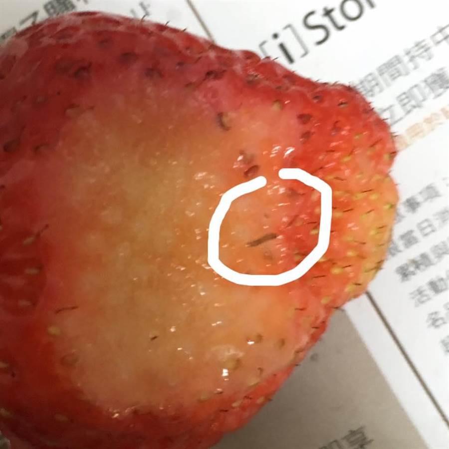 一名網友表示自己到好市多購買草莓,裡頭竟有小蟲。(圖/翻攝自Costco好市多 商品經驗老實說)